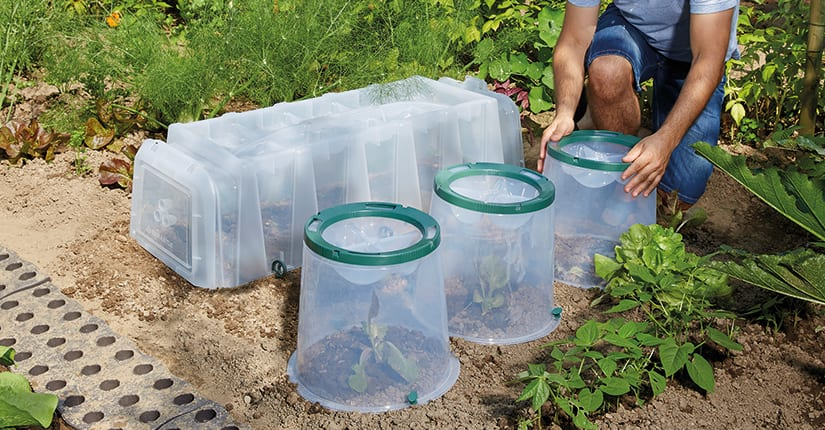 Benefits of growing tunnels and cloches